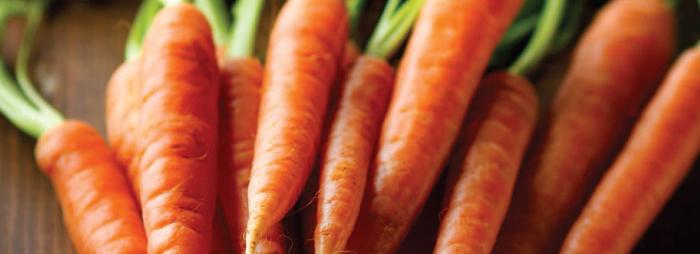 et je mange et remange des carottes_Gauloise de Nuits